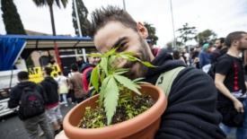 Cannabis light e Cassazione