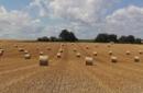 Scomparso un campo di grano su cinque
