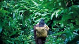 Sinodo Amazzonia: paradigma per il pianeta