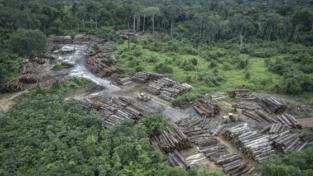 L'Amazzonia vera e quella fake