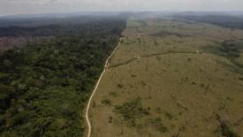 Amazzonia, aumenta la deforestazione