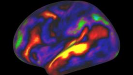 La coppia e i due emisferi cerebrali