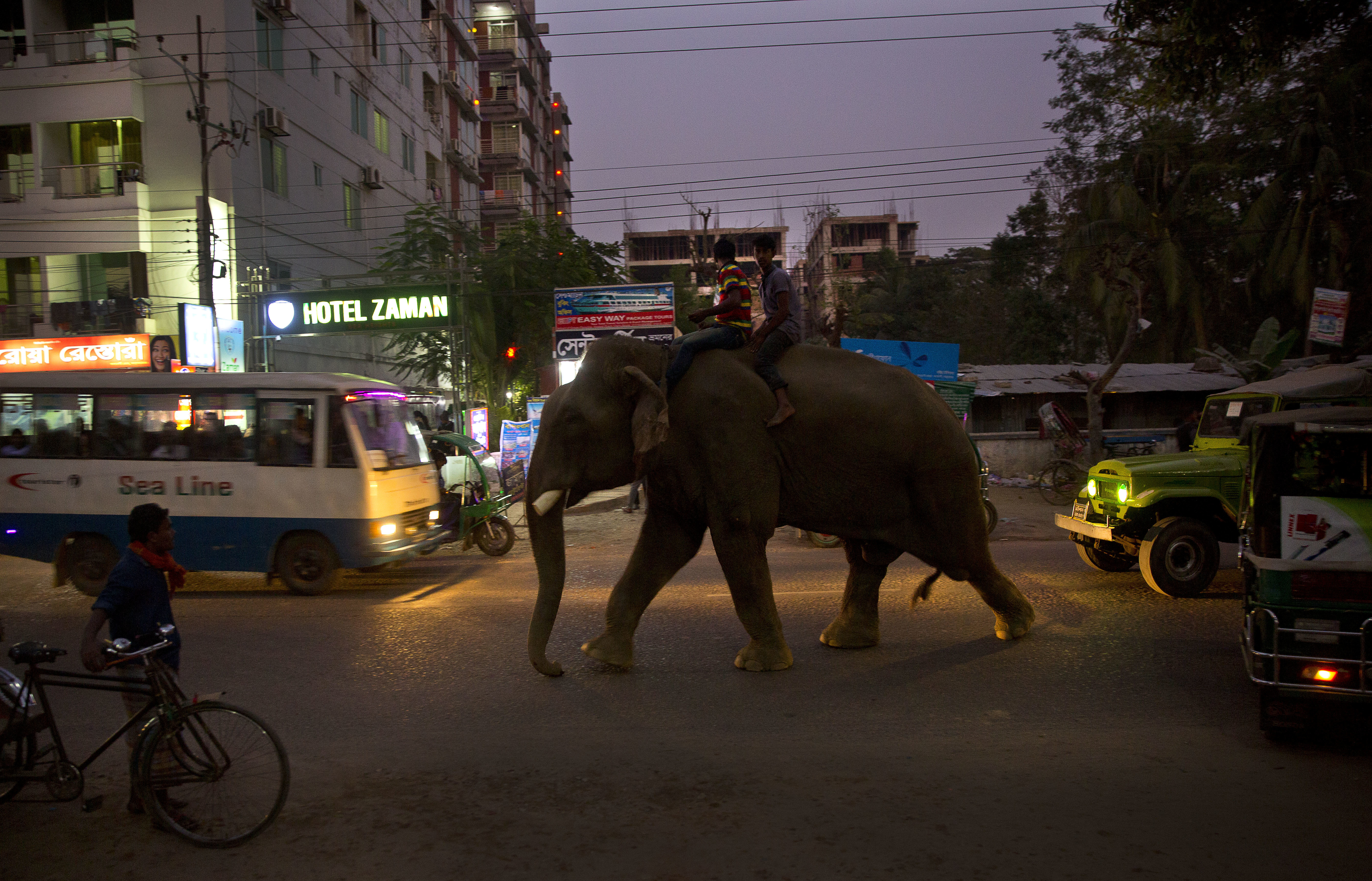 An elephant walks through a street amid traffic in Cox's Bazar, Bangladesh, Friday, Jan. 26, 2018. Miles-long beaches makes this coastal district Bangladesh's top tourist destination. (AP Photo/Manish Swarup)
