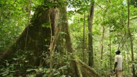 Il Gabon premiato per la lotta alla deforestazione