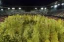 Il bosco nello stadio