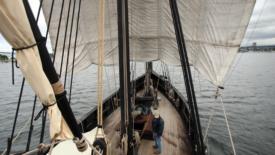 La scoperta di Colombo si rinnova nella storia