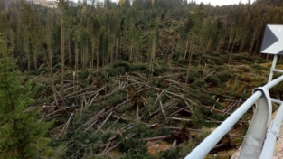 Un progetto per ripiantare gli alberi sulle Dolomiti