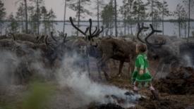 Dove l'uomo dipende dalle renne