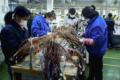 Riaprono alcune fabbriche in Cina