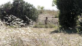 Coldiretti, allarme siccità in Italia