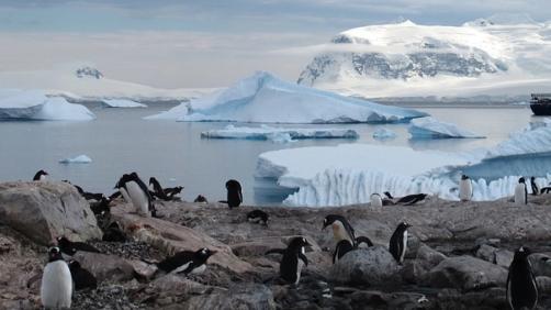 L'Antartide si sta sciogliendo (Pixabay)