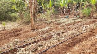 Agricoltura biologica all'africana