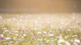 Poetica della Favola fiorita di Chiara Lubich. Un modo di conoscenza