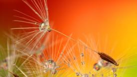 Coronavirus, storie generative