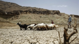 Incubo desertificazione