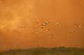 Anche il Brasile brucia