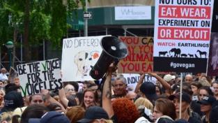 Sui diritti degli animali