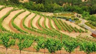 Il dibattito sull'agricoltura biodinamica