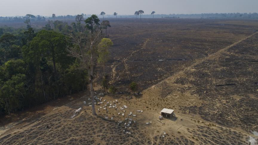 L'Amazzonia è ancora uno dei polmoni del mondo?