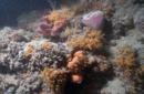 La sorprendente scogliera corallina di Monopoli