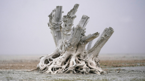 A lone dead tree stump stands as dust blows along the receding edge of the Great Salt Lake on April 19, 2021, near Antelope Island, Utah. The lake has been shrinking for years, and a drought gripping the American West could make this year the worst yet. (AP Photo/Rick Bowmer)